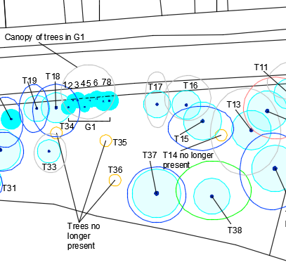 A CAD plan showing tree location, canopy spread, root protection area and categorisation in line with the current British Standard 5837.